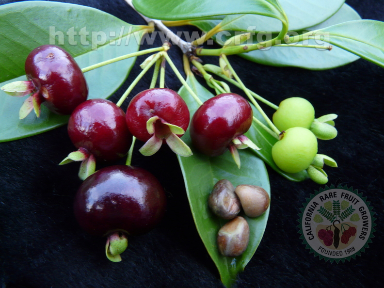 4th Place:	