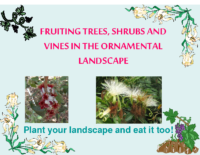 FRUITING TREES, SHRUBS AND VINES IN THE ORNAMENTAL LANDSCAPE Presentation
