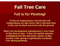 Fall Tree Care Presentation