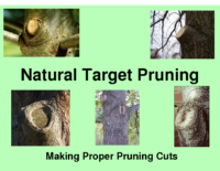Natural Target Pruning Presentation