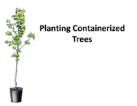 Planting Containerized Trees Presentation