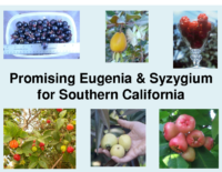 Promising Eugenia for Southern California Presentation