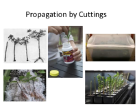Propagation by Cuttings Presentation