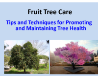 Spring Tree Care Home and Garden show 2015 Presentation